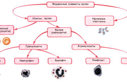Форменные элементы крови.