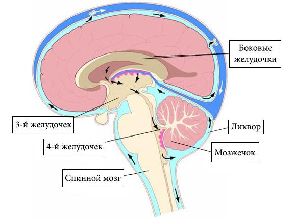 Дерматомикоз причины и лечение