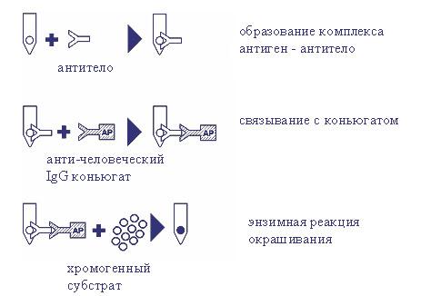 Какие препараты применяют при глистах