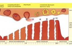 Зависимость прогестерона от менструального цикла