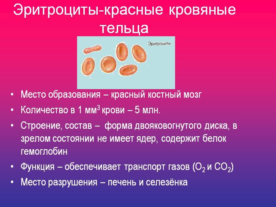 Микроцитоз фото