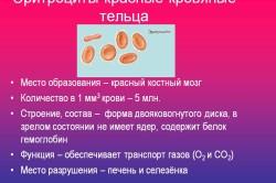 Эритроциты - красные кровяные тельца