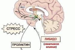 Гормон пролактин