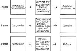 Основные этапы свертывания крови