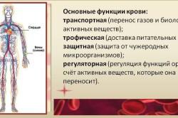 Основные функции крови