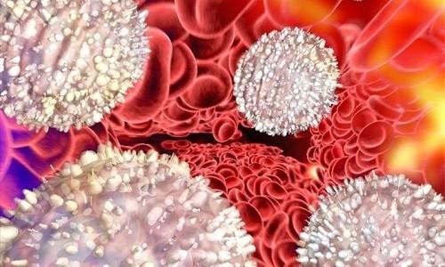 Лейкоциты в крови для защиты организма