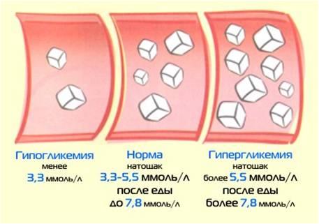 нормальное количество холестерина в крови