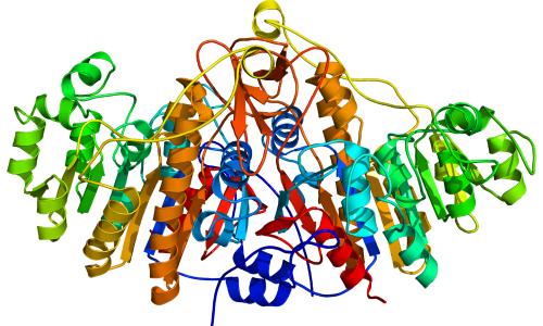 Щелочная фосфатаза в крови