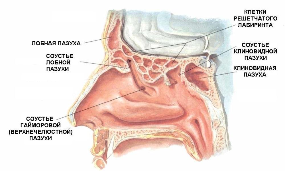 Чем вылечить заболевание в носу