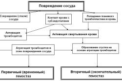Схема гемостаза