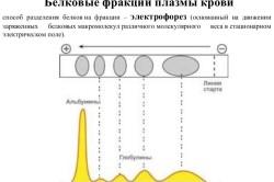 Белковые фракции плазмы крови