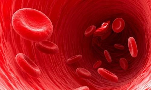 Кровь человека