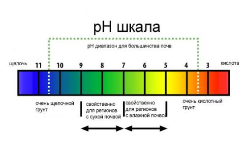 Шкала кислотно-щелочного баланса организма