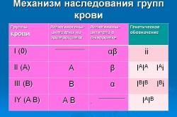 Механизм наследования групп крови