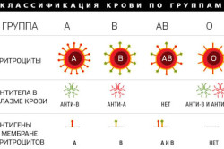 Классификация групп крови