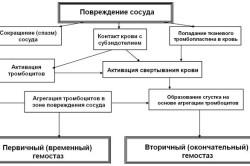 Виды гемостаза