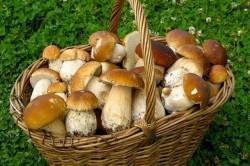 Польза грибов при сахарном диабете