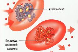 Схема гемоглобина