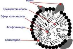Схема строения липопротеина