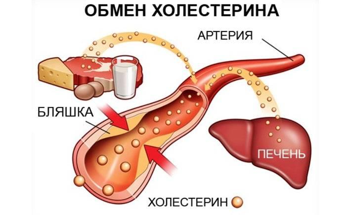 как понизить холестерин в организме