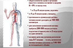 Общее количество крови у человека