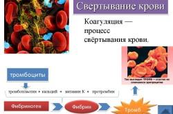 Поэтапная схема свертывания крови