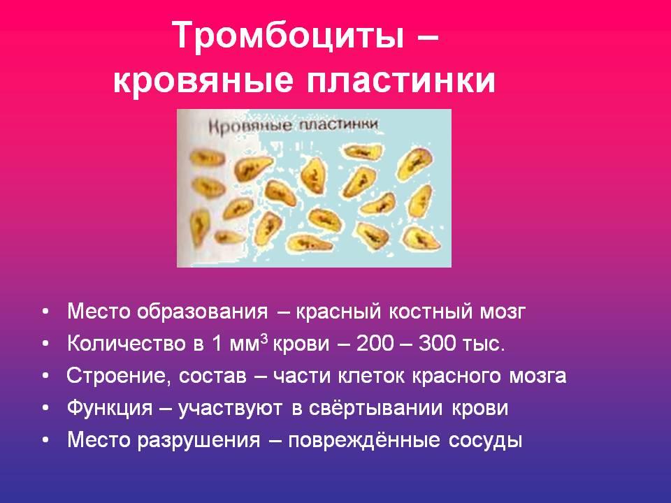 лечение при повышенном холестерине у женщин
